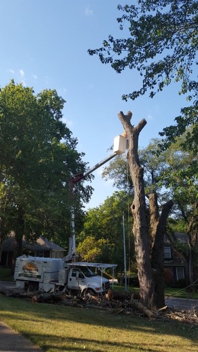 tree-removal2