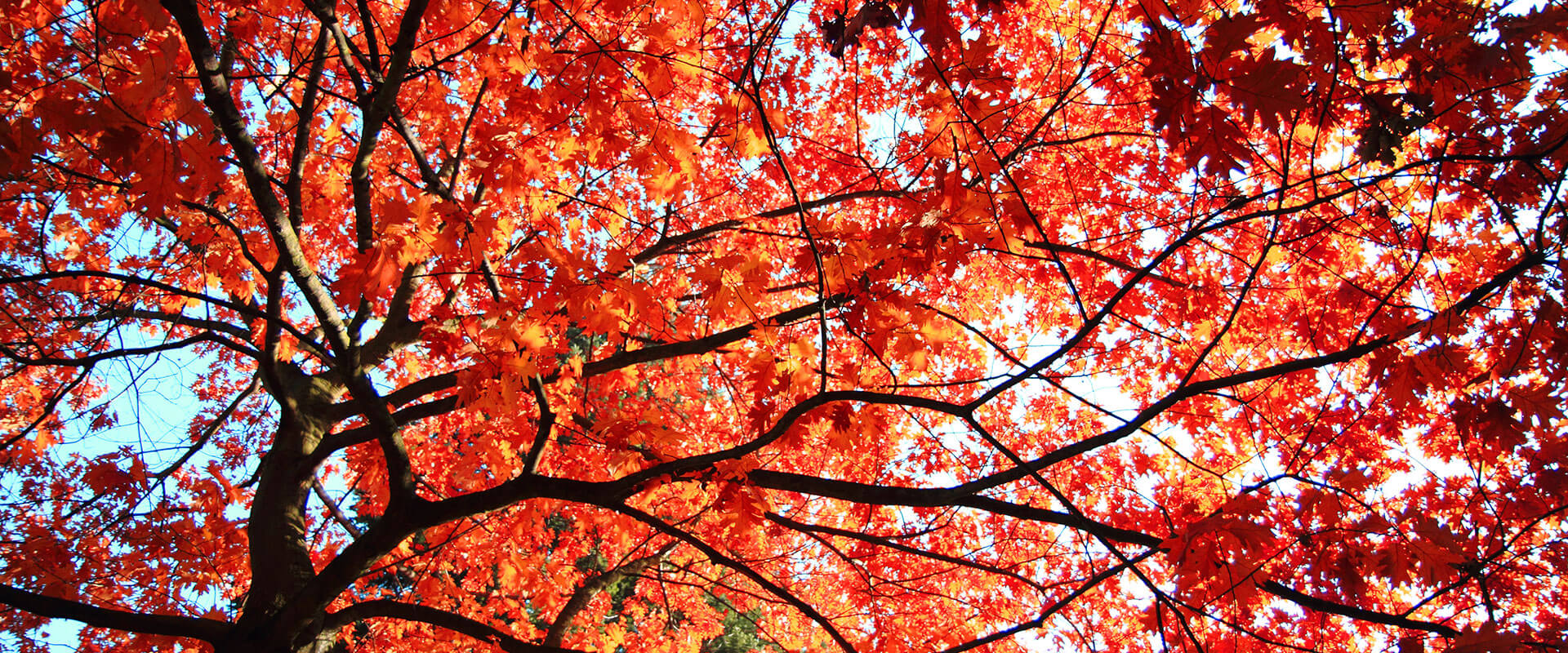 sunshine-tree-service-fall