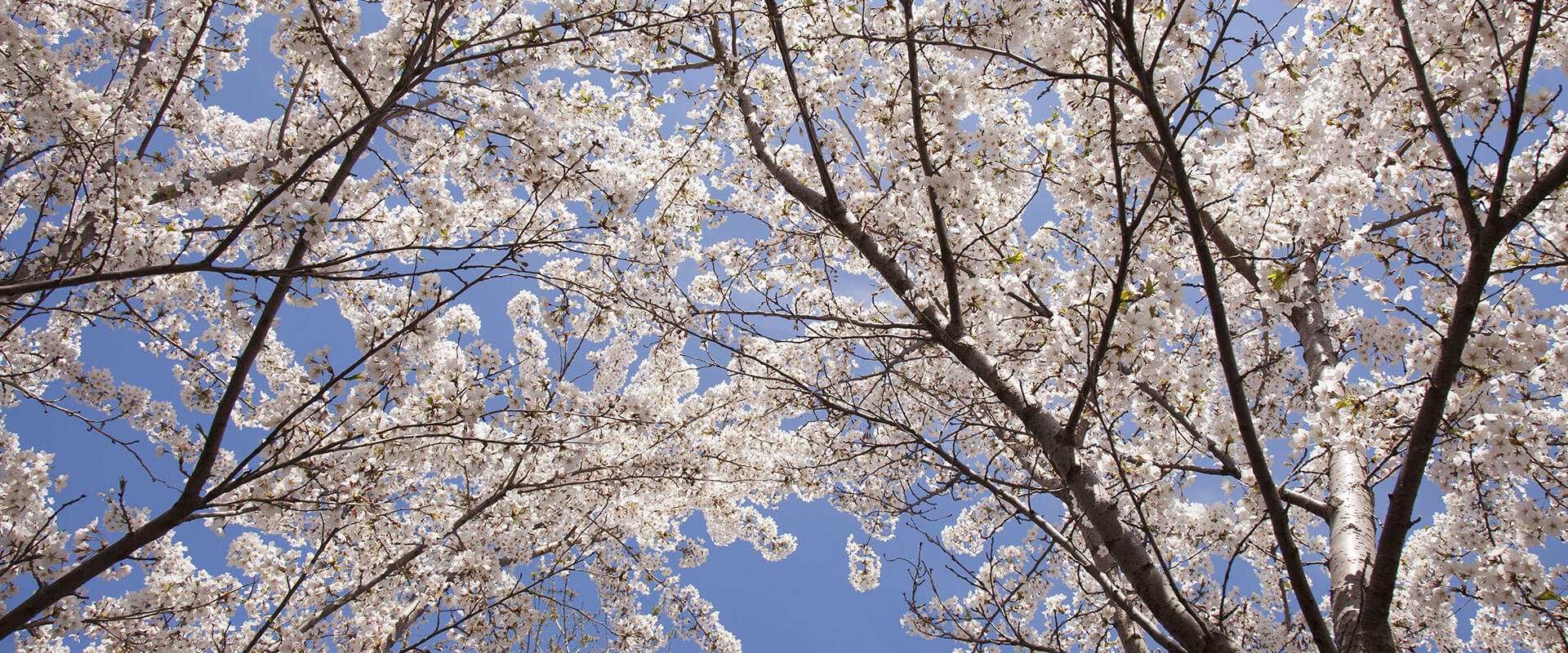 sunshine-tree-service-spring