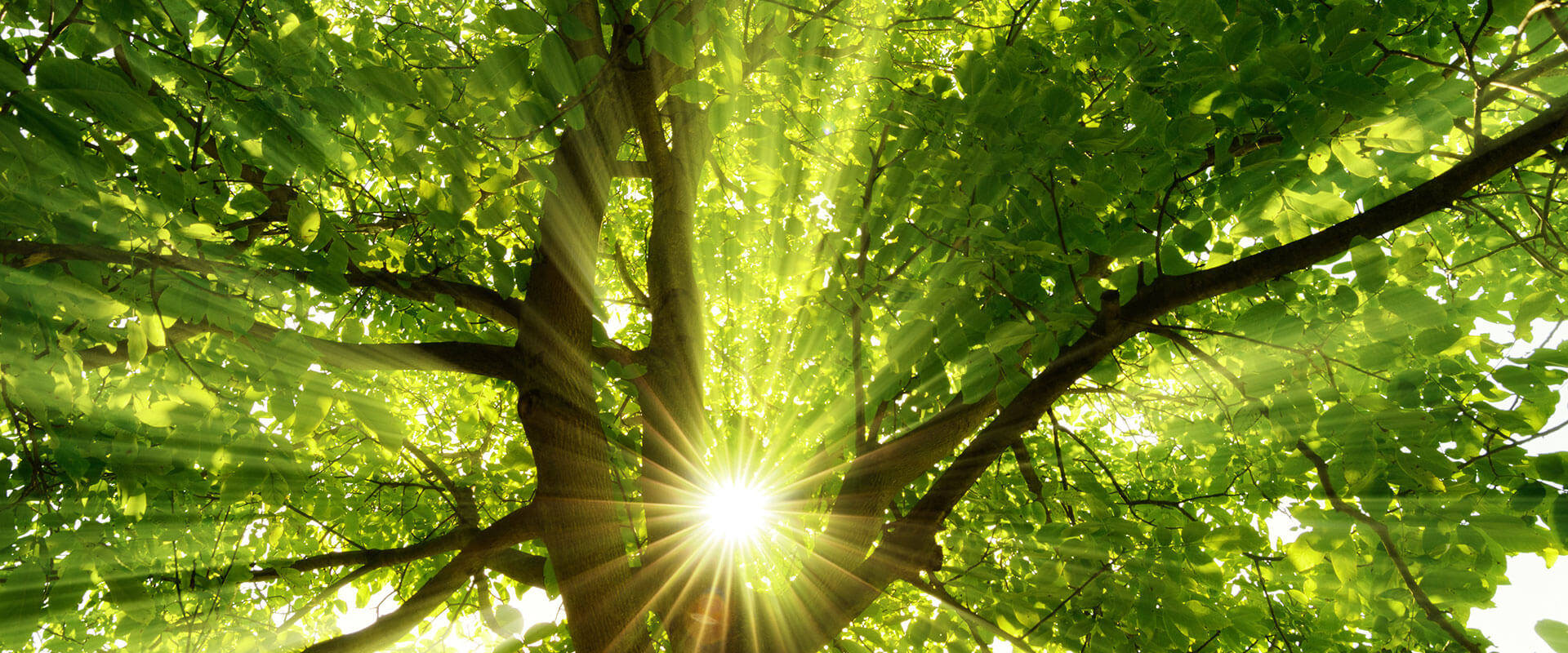 sunshine-tree-service-summer